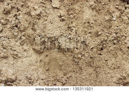 texture of a major coarse construction brown sand