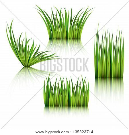 Fragments of the green grass isolated on white. Vector illustration.