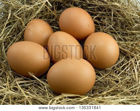 Seven Egg on a haystack background .