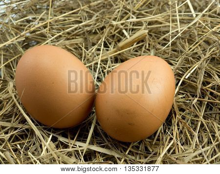 Two Eggs on a haystack background .