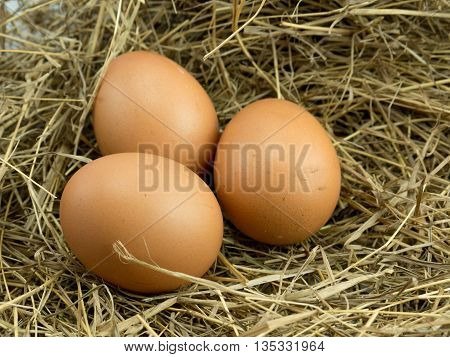 Three Eggs on a haystack background .
