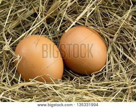 Two Egg on a haystack back ground