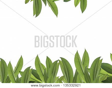 green leaf for frame white background with clipping path