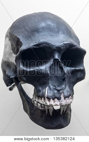 Skull of neanderthal - close up view