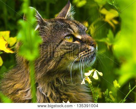 cat. Cat portrait close up only head crop. Cat in the Green Grass in Summer. relax kitten on green grass. cat on grass
