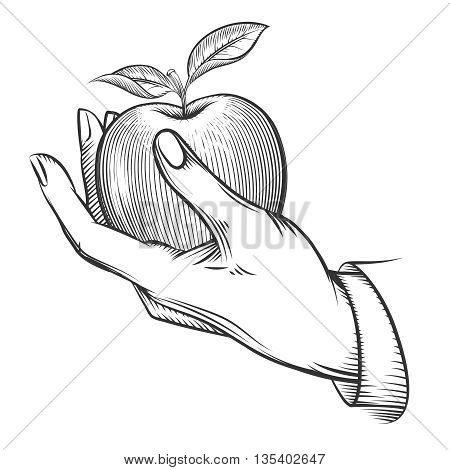 Human hand with apple drawn in engraving style. Apple fruit, nature, food apple fresh, engraving apple with leaf, vintage sketch organic, apple. Vector illustration