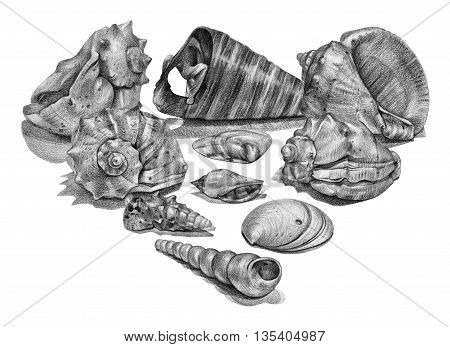 Set of different seashells drawn by hand with pencil. Pencil sketch academic drawing. Summer sea theme