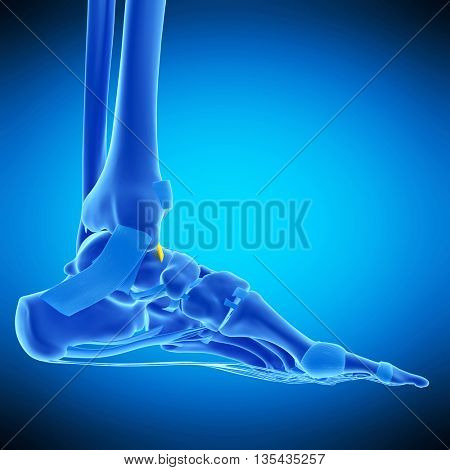 3d rendered, medically accurate illustration of the anterior tibiotalar ligament
