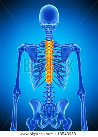 3d rendered, medically accurate illustration of the thoracic spine