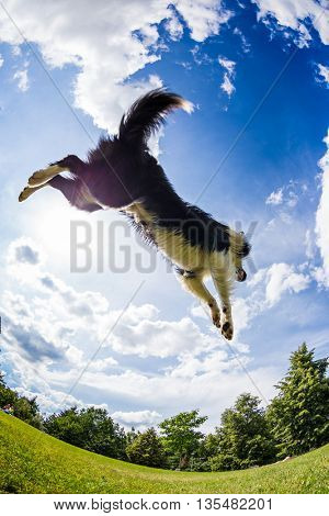 Border Collie jumping for the ball. Beautiful cloudy sky in background.