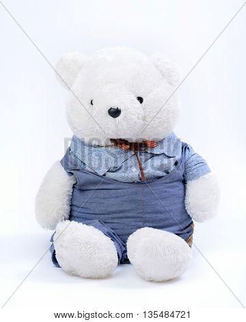 Sitting white Teddy bear on white background