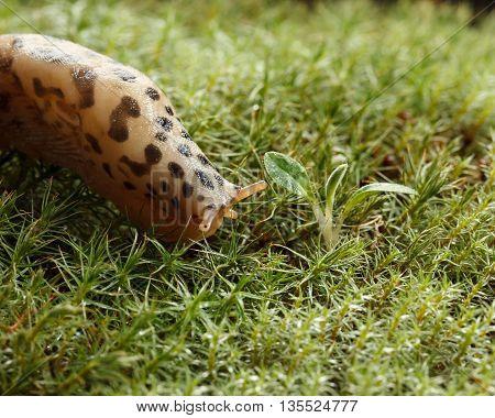 Slug And Plant