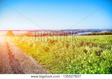 verge and field of green wheat under bright blue sky and river far as background