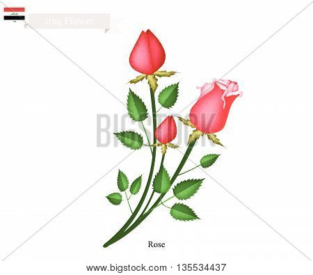 Iraq Flower Illustration of Rose Flowers. The National Flower of Iraq.