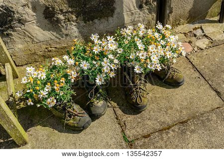 Flowers growing in a pair of boots at the small village of Footdee (aka Fittie). A nineteenth century fishing village close to entrance of Aberdeen harbour.