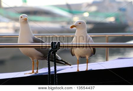 Two seagulls in a yacht