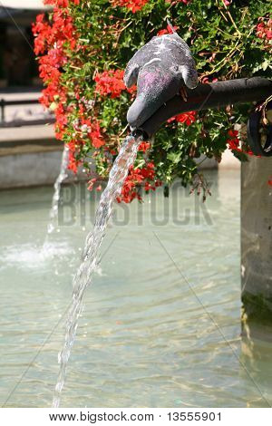 Pigeon drinking water from a fountain on a hot summer day on a marketsquare poster