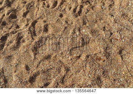 Footprints in golden sand on a beach