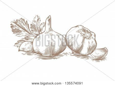 Drawing of two gralic's head two garlic's cloves and fresh green parsley