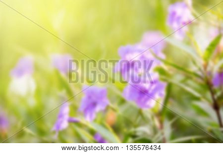 sweet dreamy and de-focused Ruellia tuberosa flower filed and Bokeh light background