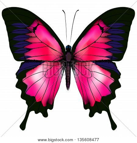 Butterfly. Vector illustration of beautiful red butterfly isolated on white background