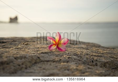 Select focus flower drop on the ground, soft background the sea