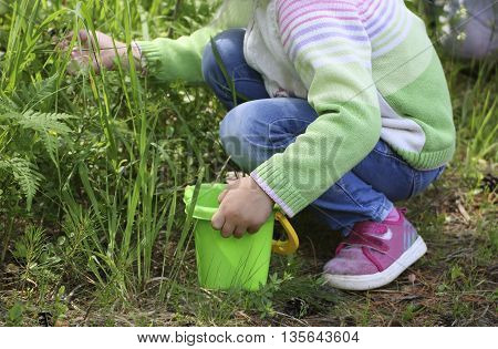 The girl dressed in a green blouse and pink shoes sitting on his haunches in the grass and the leaves of blueberries and collects the berries in a children's plastic bucket