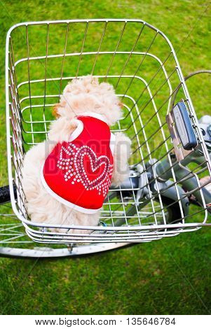 Cute dog in basket bicycle at the park