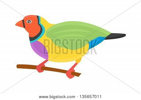 Cartoon parrots bird and parrot wild animal bird. Tropical parrot feather zoo birds tropical fauna macaw flying ara. Various cartoon exotic bird with parrots illustration vector