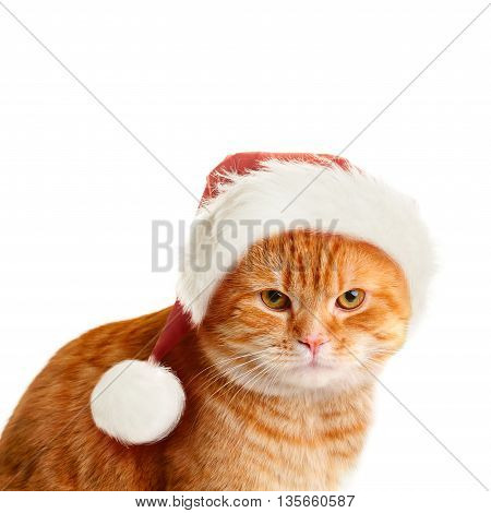 Sullen Cat in Santa Hat on White Background. Christmas Concept