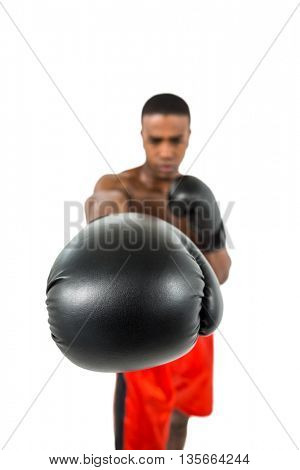 Boxer performing upright stance on white background