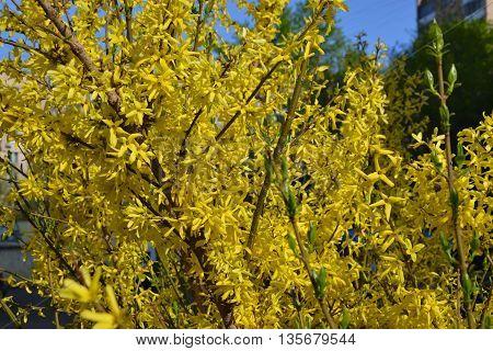 Autumn. Flowering bush. Yellow flowers. No name