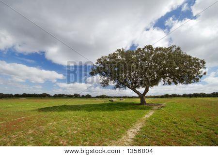 Tree In The Field