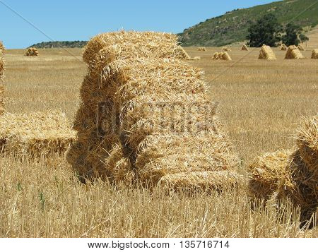 Bails Of Hay Lying In A Harvested Wheat Field 02