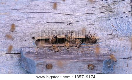 Swarm of bees near a beehive, blue color