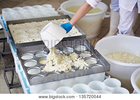 Factory Workers Fill Molds For Production Of Soft Cheese