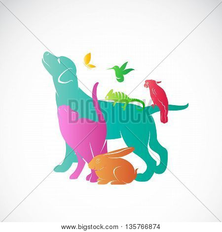 Vector group of pets - Dog cat parrot chameleon rabbit butterfly hummingbird isolated on white background / Vector pets for your design.