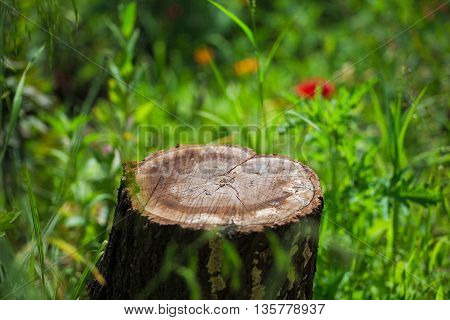 stump stay in the green grass and little flowers
