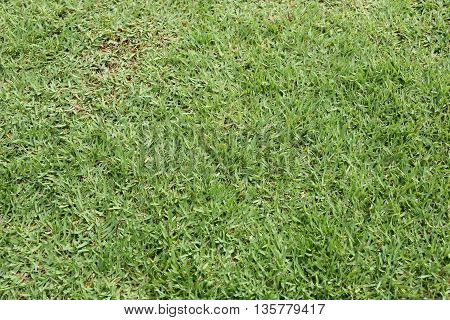 green grass field and perspective to copy space for multi purpose and design nature background.