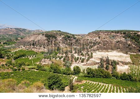 Cretan rural landscape with olive trees. Greece.