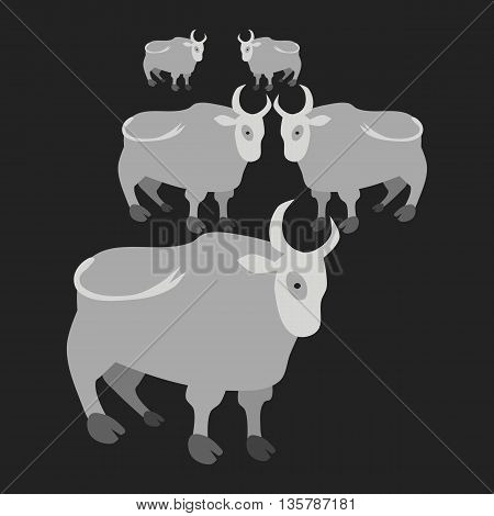 Gray cows on black background - simple flat illustration