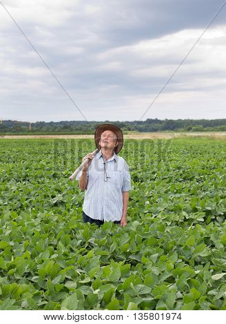 Senior Peasant In Soybean Field