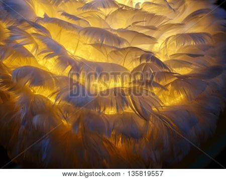 White feathers of a bird with warm yellow light behind background image