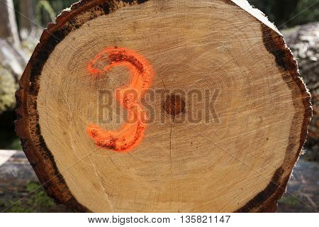 A sawn log with the number three spray painted onto it