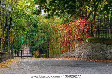 urban landscape. street of the old town is wet after rain with yellowed trees red ivy on the wall and street lamps