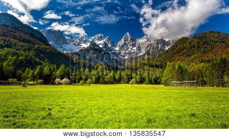 Slovenian Julian Alps and the Špik (Spike) mountain. Spring meadow and the mountain.