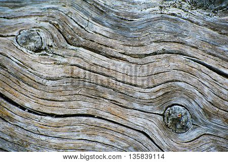 Old wood texture with knots and swirls