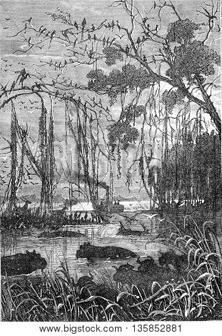 Wild animals in a swamp or river in South Africa. From Jules Verne 3 Russians and 3 English Book, vintage engraving, 1871.