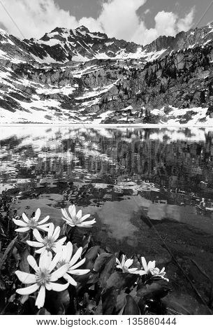 Wildflowers and Snowy Mountain Reflected in Pitkin Lake.  Veil Pass, Rocky Mountains, Colorado