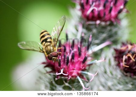 Marco animal organism life photo bee honey bee Flower art ling background